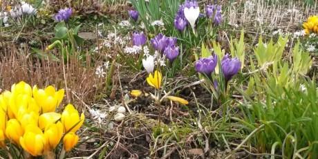 Ostern Blumen Franken Oberfranken